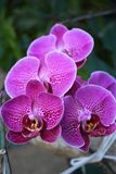 orchidee in wildernis royalty-vrije stock fotografie