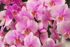 orchidee Wiosna Tło Zdjęcia Royalty Free