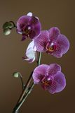Orchidee zuhause Stockfotos