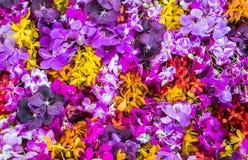 Orchideeachtergrond Stock Fotografie