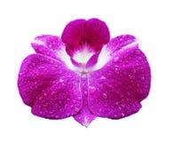 Orchideeachtergrond Stock Foto's