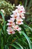 Orchideeanlage Lizenzfreies Stockbild