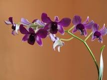 Orchideeblüten Stockfoto