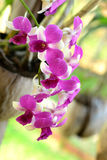 Orchideebloem. royalty-vrije stock foto's