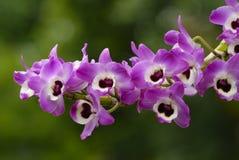 Orchideebloem Stock Foto