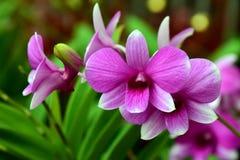 orchideebloem, Aard, Orchidee stock foto's