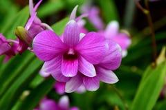 orchideebloem, Aard, Orchidee royalty-vrije stock fotografie