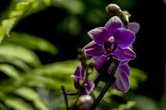 Orchideebloem in de dag van de tuinlente Orchideebloem voor het ontwerp van de schoonheidsprentbriefkaar en landbouwconcept royalty-vrije stock foto