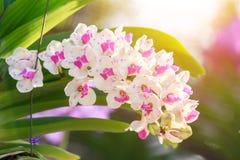 Orchideebloem in de tuin bij de winter of de lentedag Stock Afbeeldingen