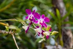 Orchideebloem in de tuin, de aardachtergrond of het behang Stock Afbeelding