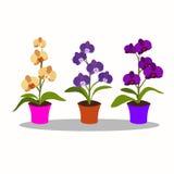 Orchideebloem geïsoleerde aard stock afbeelding