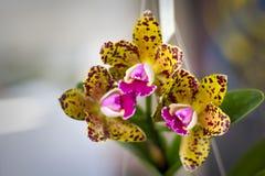 Orchideebloem met onscherpe achtergrond royalty-vrije stock fotografie