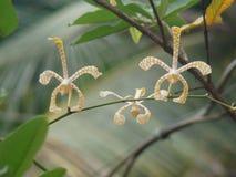 Orchideebloem met zoete bokeh Stock Foto's