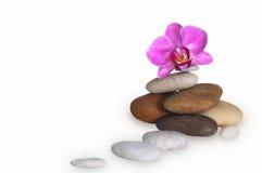 Orchideebloem op de rotsen in wit Stock Fotografie
