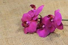 Orchideebloem op de textuur van stof Stock Foto