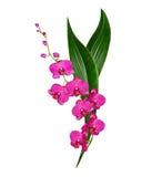 Orchideebloem op witte achtergrond wordt geïsoleerd die Stock Fotografie