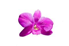 Orchideebloem op witte achtergrond wordt geïsoleerd die Royalty-vrije Stock Afbeelding