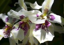 Orchideebloem in tropische tuin dichte omhooggaand Bloemen achtergrond Royalty-vrije Stock Afbeelding