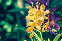 Orchideebloem in tuin bij de winter, de lente voor ontwerp Royalty-vrije Stock Afbeeldingen
