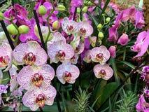 Orchideebloem in tuin bij de winter of de lentedag stock afbeeldingen