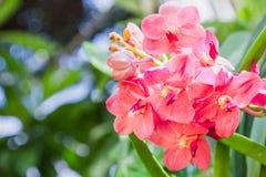 Orchideebloem in tuin bij de winter of de lentedag voor prentbriefkaarschoonheid en het conceptontwerp van het landbouwidee royalty-vrije stock afbeelding