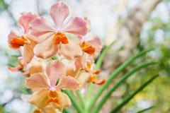 Orchideebloem in tuin bij de winter of de lentedag voor prentbriefkaarschoonheid en het conceptontwerp van het landbouwidee royalty-vrije stock foto's