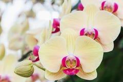 Orchideebloem in tuin bij de winter of de lentedag voor prentbriefkaarschoonheid en het conceptontwerp van het landbouwidee stock foto's