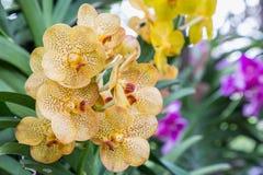 Orchideebloem in tuin bij de winter of de lentedag voor prentbriefkaarschoonheid en het conceptontwerp van het landbouwidee stock afbeelding
