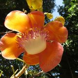 Orchideebloem van Thailand Royalty-vrije Stock Foto