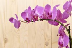 Orchideebloemen Stock Fotografie