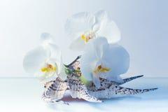 Orchideebloemen Royalty-vrije Stock Foto