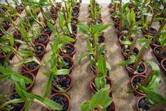 Orchideebloemen in de pottentuin in de serre royalty-vrije stock foto