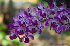 Orchideebloemen in de Tuin stock foto