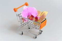 Orchideebloemen in handkar op grijs Royalty-vrije Stock Foto's