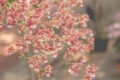 Orchideebloemen met bladeren Stock Fotografie