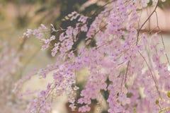 Orchideebloemen met bladeren Royalty-vrije Stock Fotografie