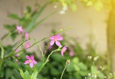 Orchideebloemen onder zonlicht Stock Foto