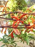Orchideebloemen in tuin Stock Afbeelding