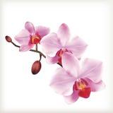 Orchideebloemen, vectorpictogramreeks royalty-vrije stock foto
