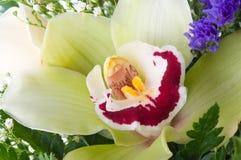 Orchideeblume Lizenzfreies Stockfoto