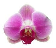Orchideeblume getrennt lizenzfreie stockfotografie