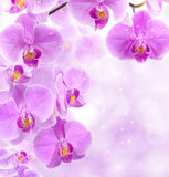 Orchideeblumen stockfotos