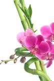 Orchideeblumen und -bambus getrennt auf Weiß Lizenzfreie Stockfotos