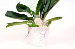 Orchideeblumenpotentiometer dekorativ Lizenzfreies Stockfoto