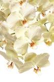 Orchideeblumenstrauß Lizenzfreies Stockbild