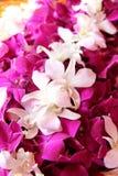 Orchideeboeket, royalty-vrije stock foto's