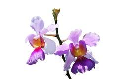 orchideeboeket Royalty-vrije Stock Foto's