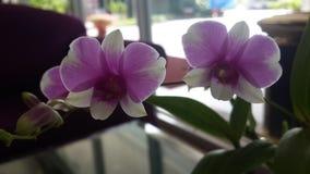 Orchideedecoratie in hotel royalty-vrije stock foto