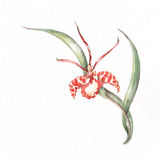 Orchideeeckmuster Lizenzfreie Stockfotos