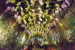 Orchideeextravagantie, Tuinen door de Baai, Singapore Stock Afbeelding